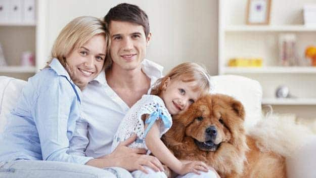 Wills & Trusts dog-young-family Direct Wills Kingsbury